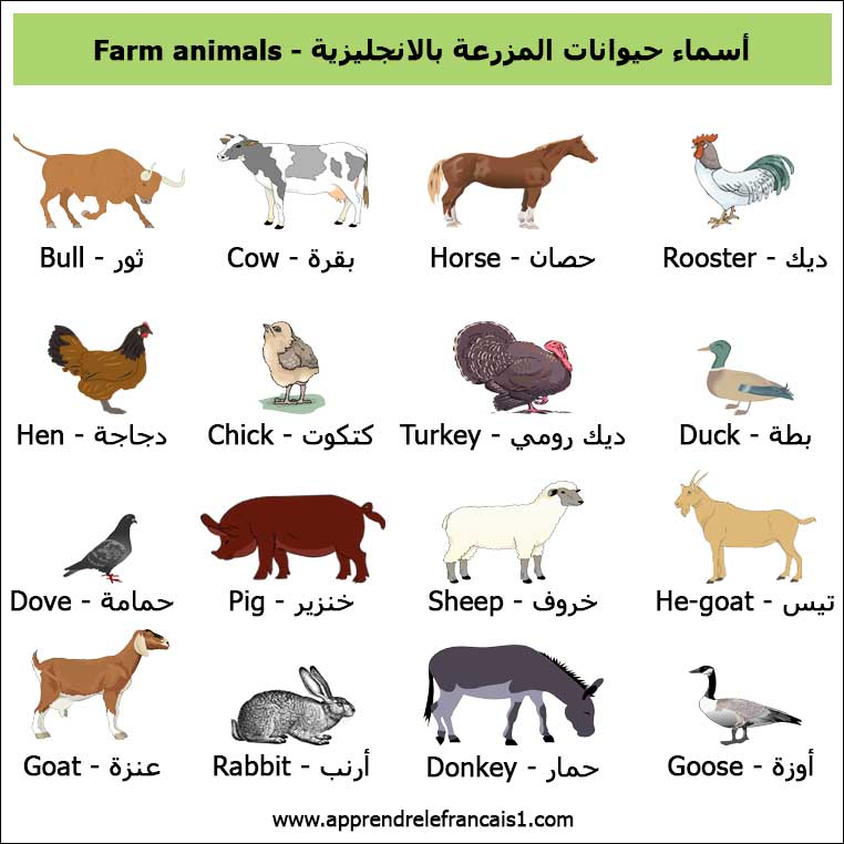 اسماء حيوانات المزرعة بالانجليزية