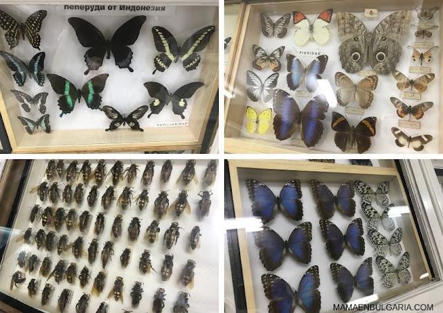 insectos Museo Ciencias Naturales Sofía Bulgaria