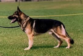 Sefer Koira