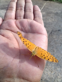 Butterfly upon palm