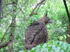 Beberapa Fakta dan Misteri dibalik Burung Garuda