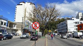 Árvores do canteiro central ganham cuidados especiais da Prefeitura de Teresópolis