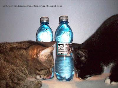 woda dla kotów, woda dla psów