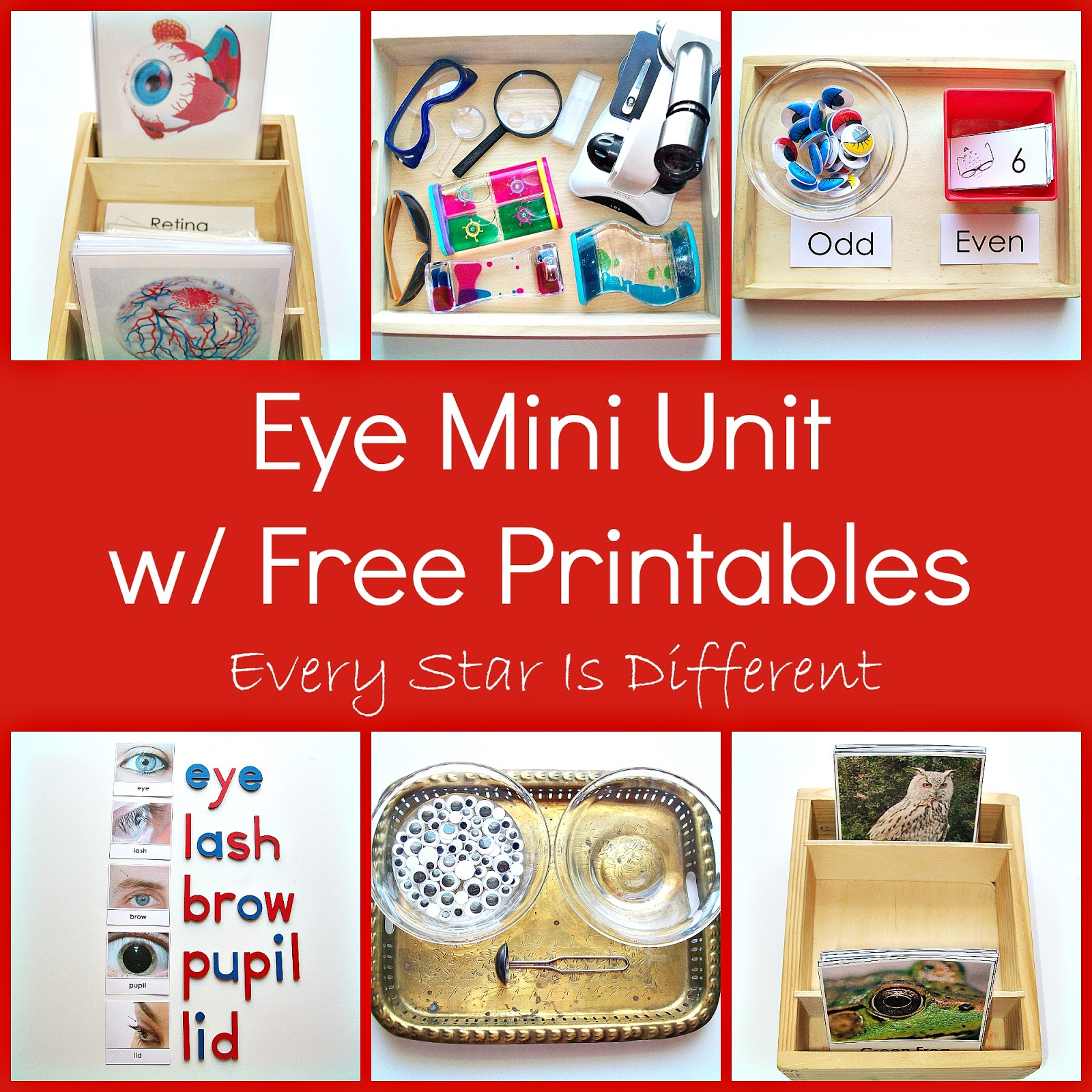 My Body Unit W Free Printables Learn Amp Play Link Up