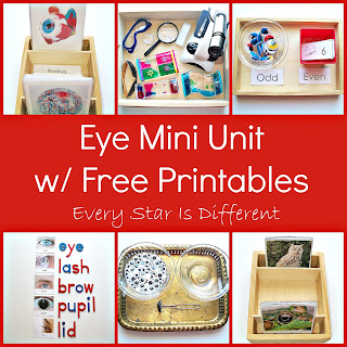Eye Mini Unit with Free Printables