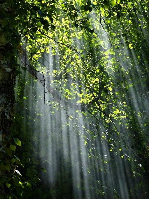 Raios de sol entre árvores. #PraCegoVer