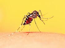 Cara Mencegah dan Mengusir Nyamuk