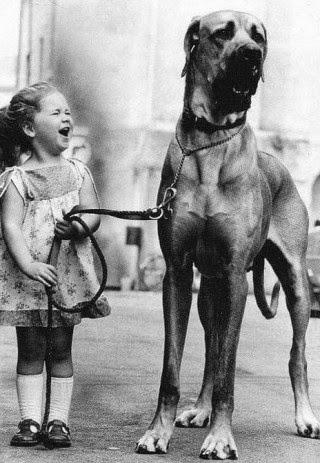 See more Big dog and beautiful girls http://cutepuppyanddog.blogspot.com/