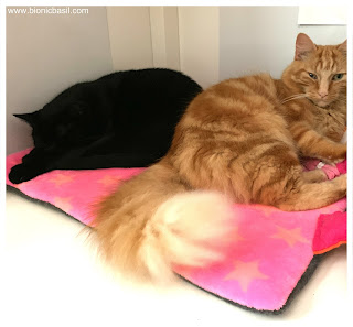 Parsley and Fudge on the Snuggle Blanket @BionicBasil®