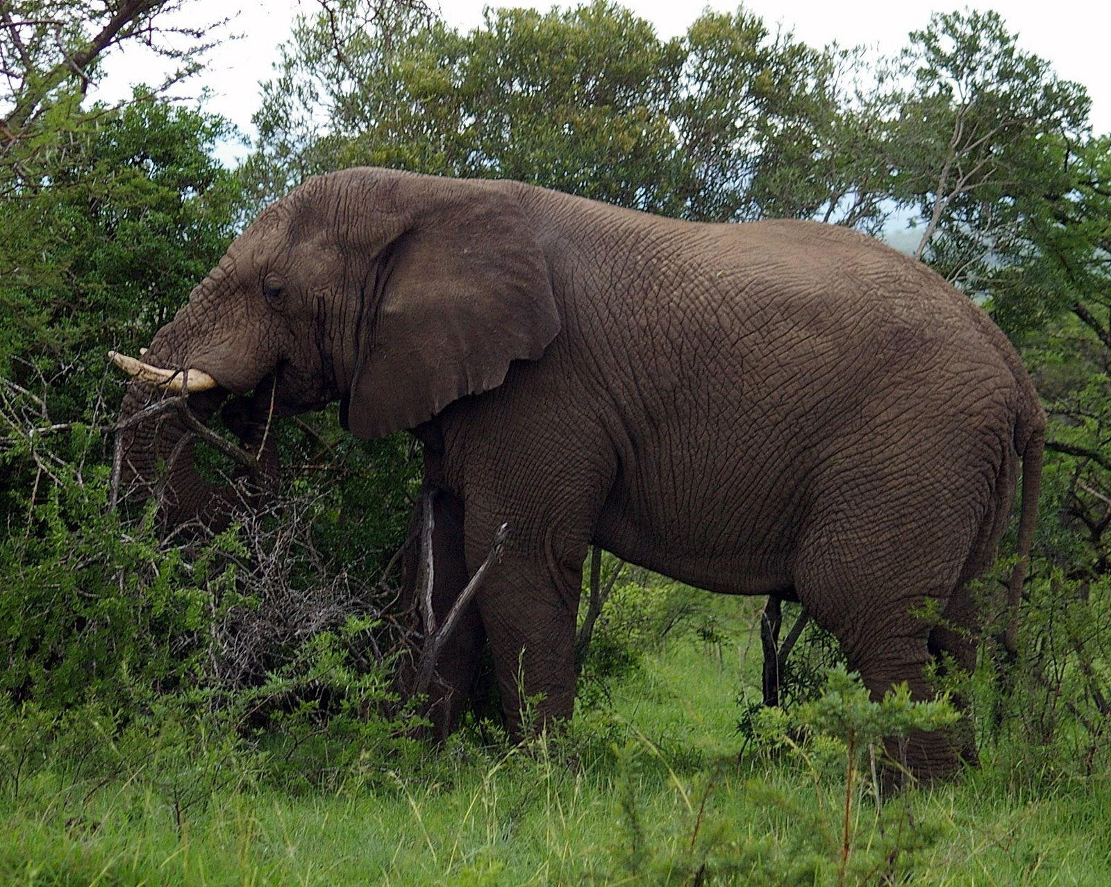 Largest animals