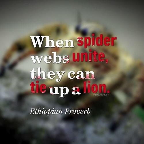 Display Picture Spider Webs Unite