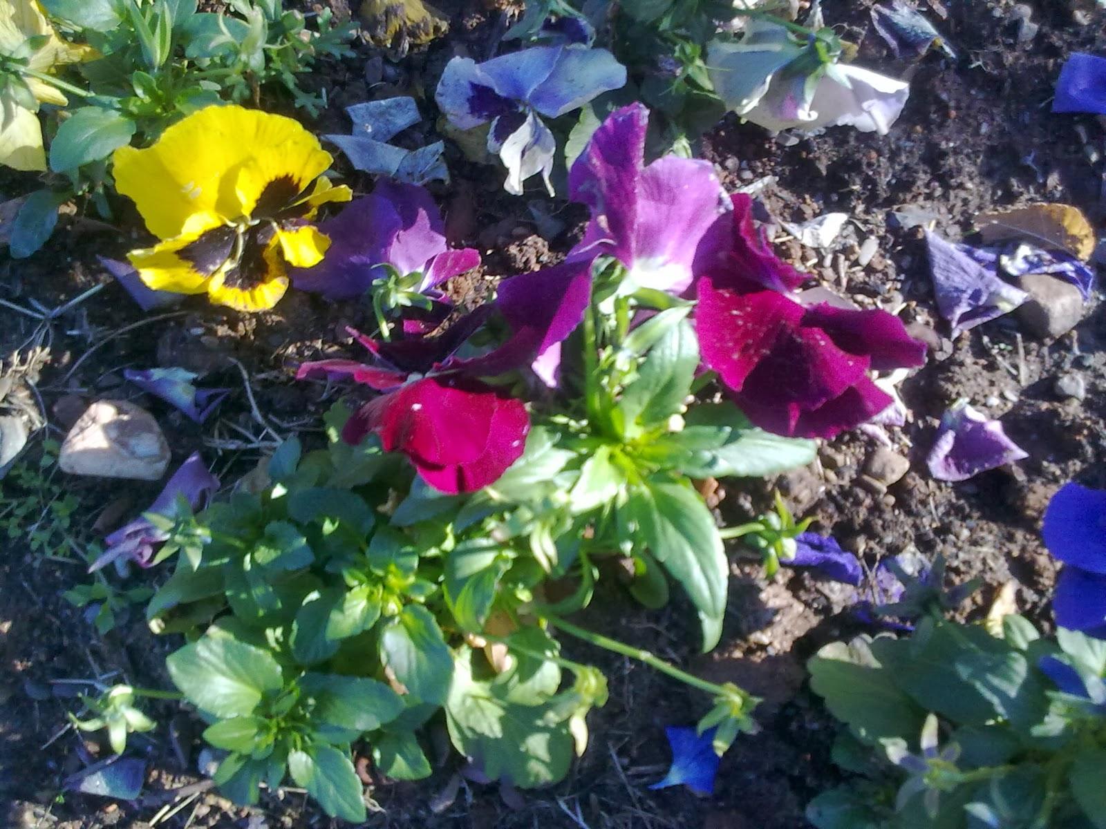 Entre patios y plantas flores para primavera y verano for Plantas para mi jardin