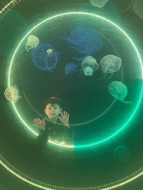 Boy with jellyfish at the sea life centre