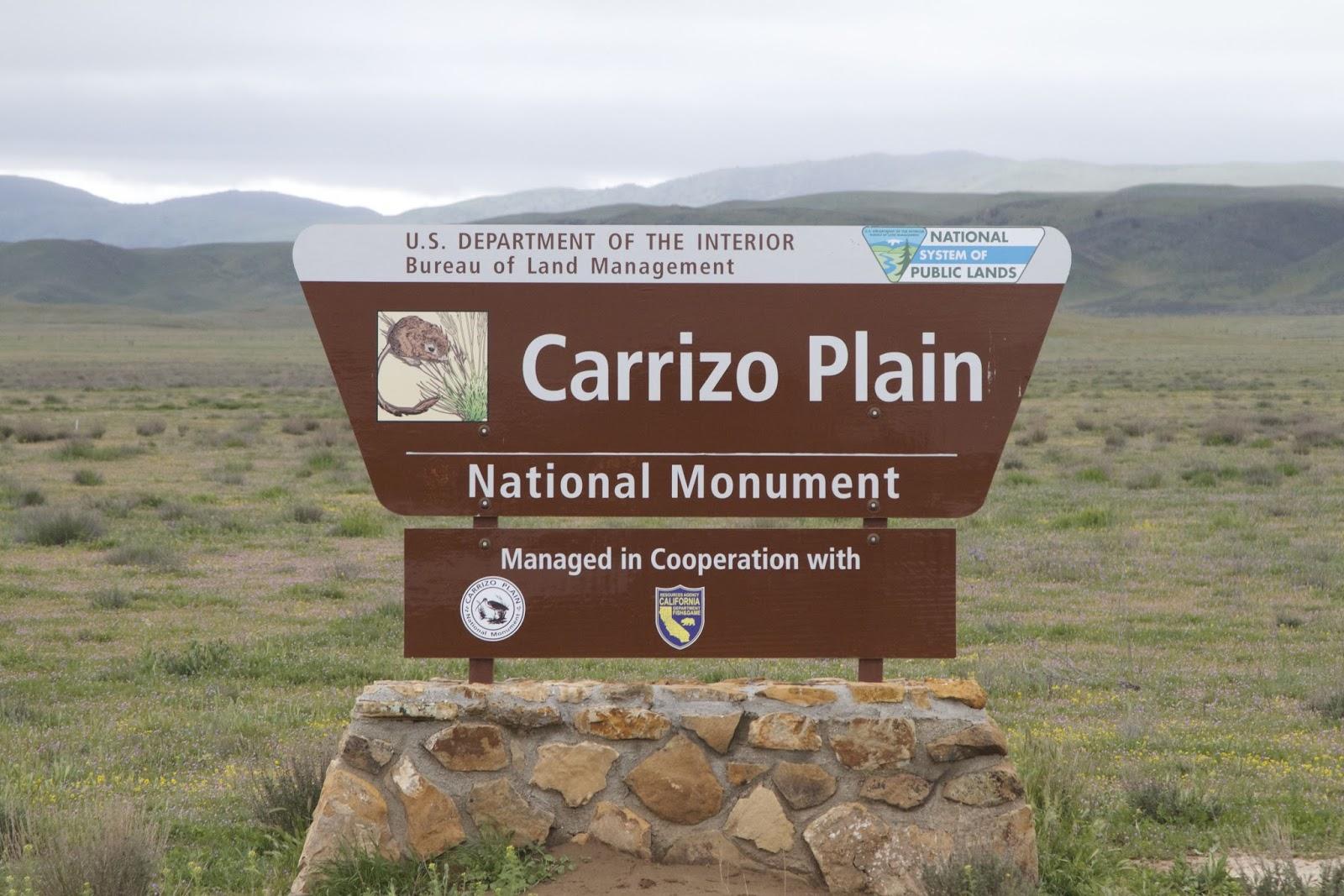 Carrizo Plain National Monument: Raw California