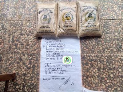 Benih padi yang dibeli   SARIF MATUA Pasaman, Sumbar.     (Sebelum di Packing)