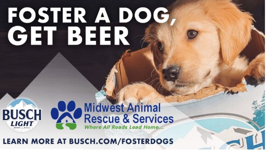 Empresa te da cerveza gratis por tres meses si adoptas a un perrito