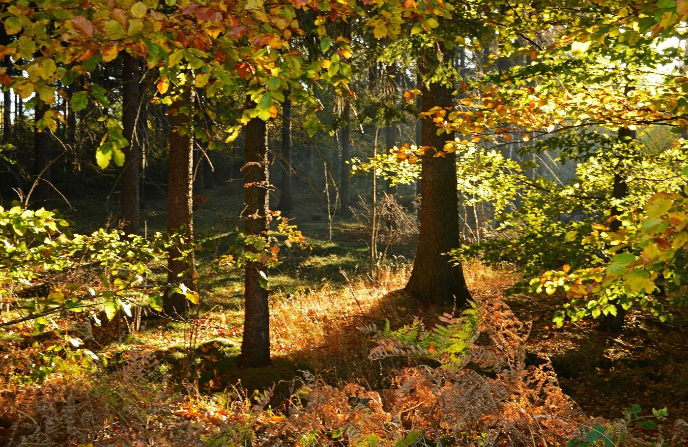 Jesień Góry Stołowe Sudety Szlaki