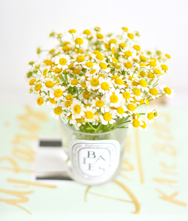 Chamomile Blooms