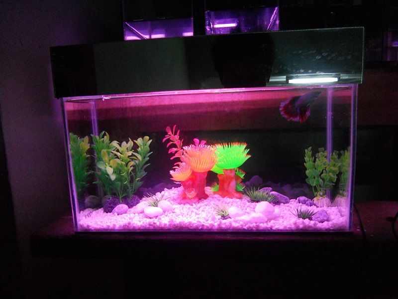 Image Do Betta Fish like Fake Plants in Their Tank?