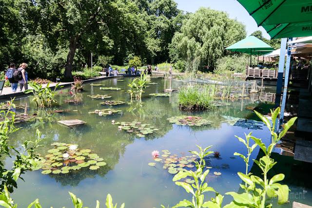 Seerosenteich im Luisenpark