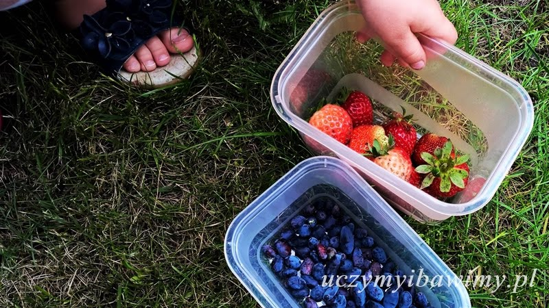 Owoce - Montessori
