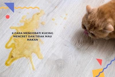 Cara Mengobati Kucing Mencret