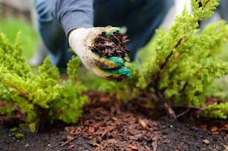 Εδαφοκάλυψη, ένας φυσικός τρόπος υγείας των φυτών