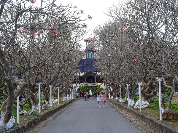 Hàng hoa sứ rợp bóng mát 2 bên lối vào Tòa giám mục Kon Tum