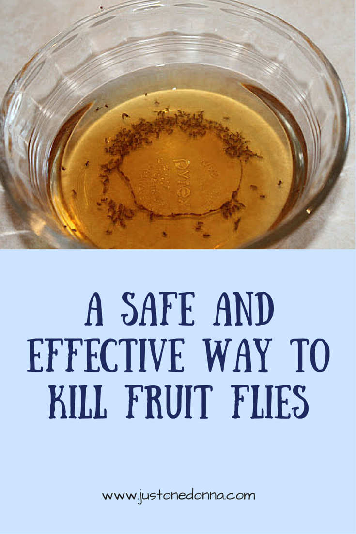 why fruit flies in bathroom, Bathroom decor