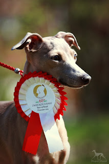 Italian Greyhound breeder kennel