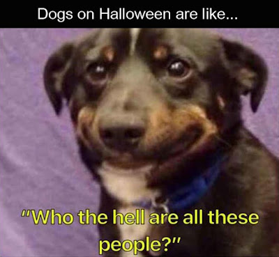 30 Best Funny Halloween Memes Images Of 2020