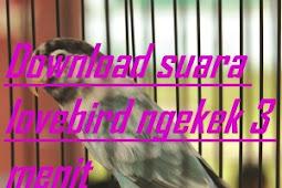 Download Mp3 Lovebird Ngekek Panjang Hingga 3 Menit