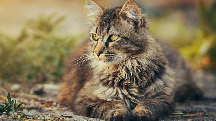 hairball cat food
