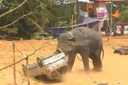 Gajah Ngamuk di Festival, Mobil Dijungkirbalikkan