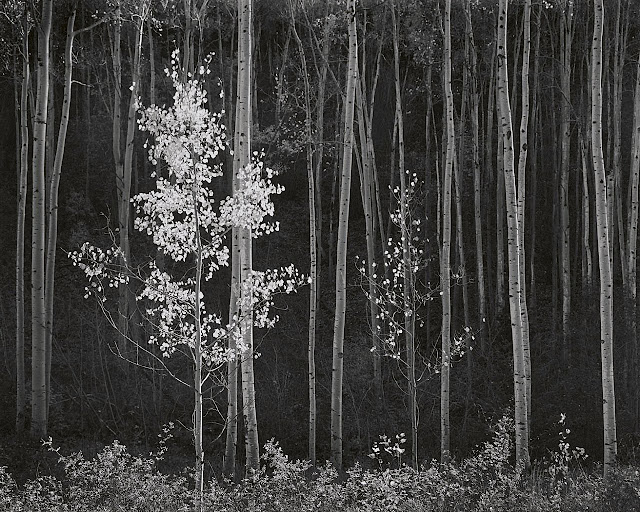 whoa..wait..what?: Wiki & Abstracts (no.19) - Photographic ... Ansel Adams Clearing Winter Storm Wiki