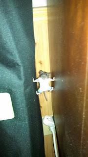 Ev faresi yatağa tırmanır mı ?