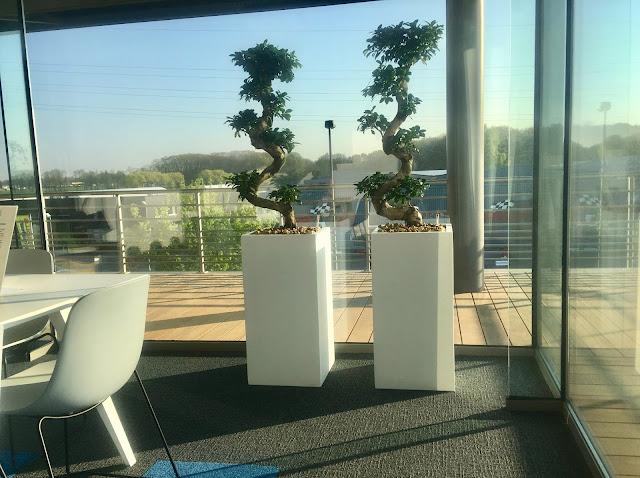 Planten voor kantoor huren prijzen op aanvraag in Brussel Limburg Vlaams-Brabant Antwerpen