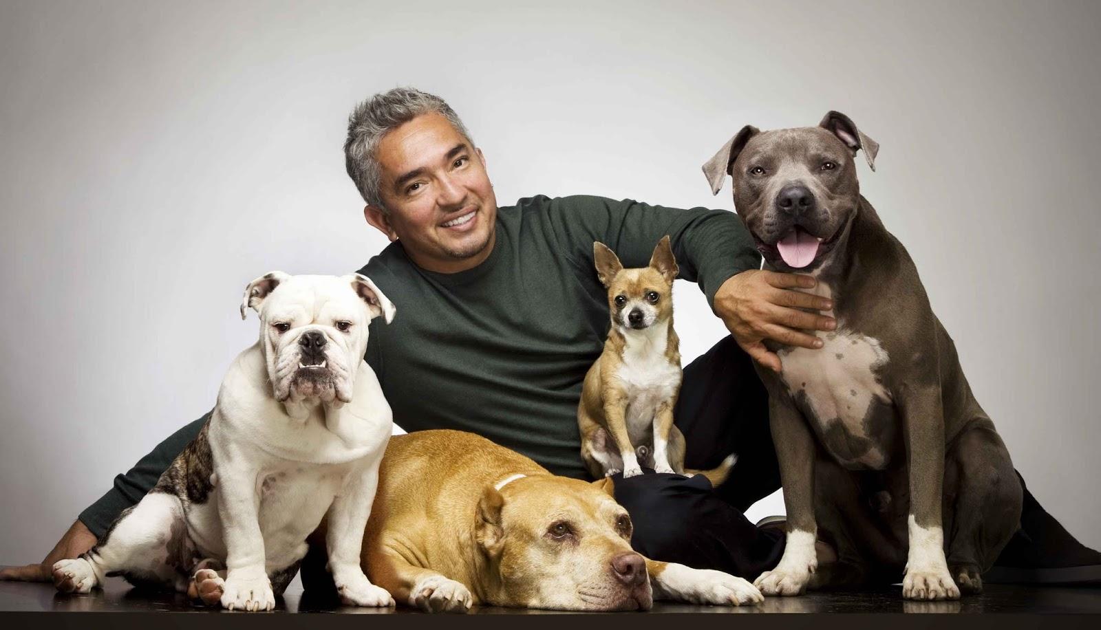 Cesar Millan S Dog Episode  Season