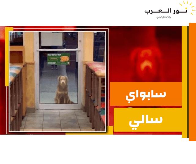 فيديو..عن كلبة تزور مطعماً يومياً للحصول على عشائها لمدة عام