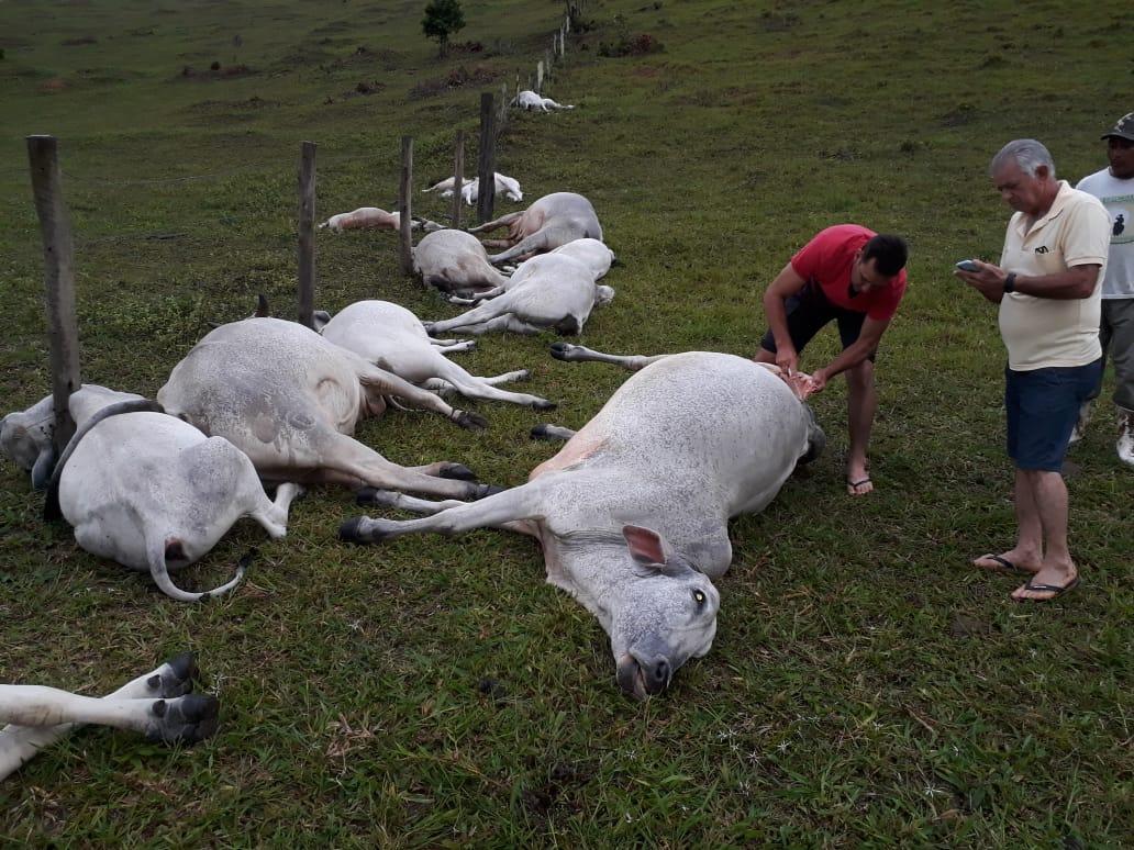 Bahia: Temporal com queda de raio provoca morte de 16 animais em fazenda