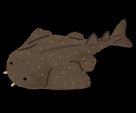 カスザメのイラスト