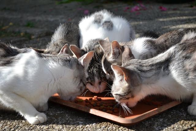 cat reacts,funny cat,funny cats,cute cat,cute cats,funny kittens,funny kitten,cats vs,cats reaction, cat reaction,cat videos,cat video,cat vs,cute kitten,cat,cats,kitten,kittens,funny cat videos,cat meowing,baby cat,baby  cats,funny animals,cute animals,funny animal,cute animal,funny video,funny videos,kutecatstv  baby dog,baby dogs,dog baby,cute dog,cute dogs,funny dog,funny dogs,dog compilation,dog videos, funny videos,cute videos,funny animals,cute animals,baby animals,animal videos,funny compilation, cute compilation,animal compilation,aww animals,cute baby dogs,funny baby dogs,baby animal videos