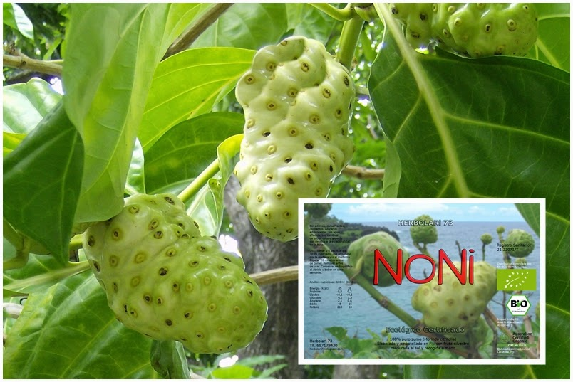 Herbolari 73 - Plantas medicinales  Aromaterapia: NONi