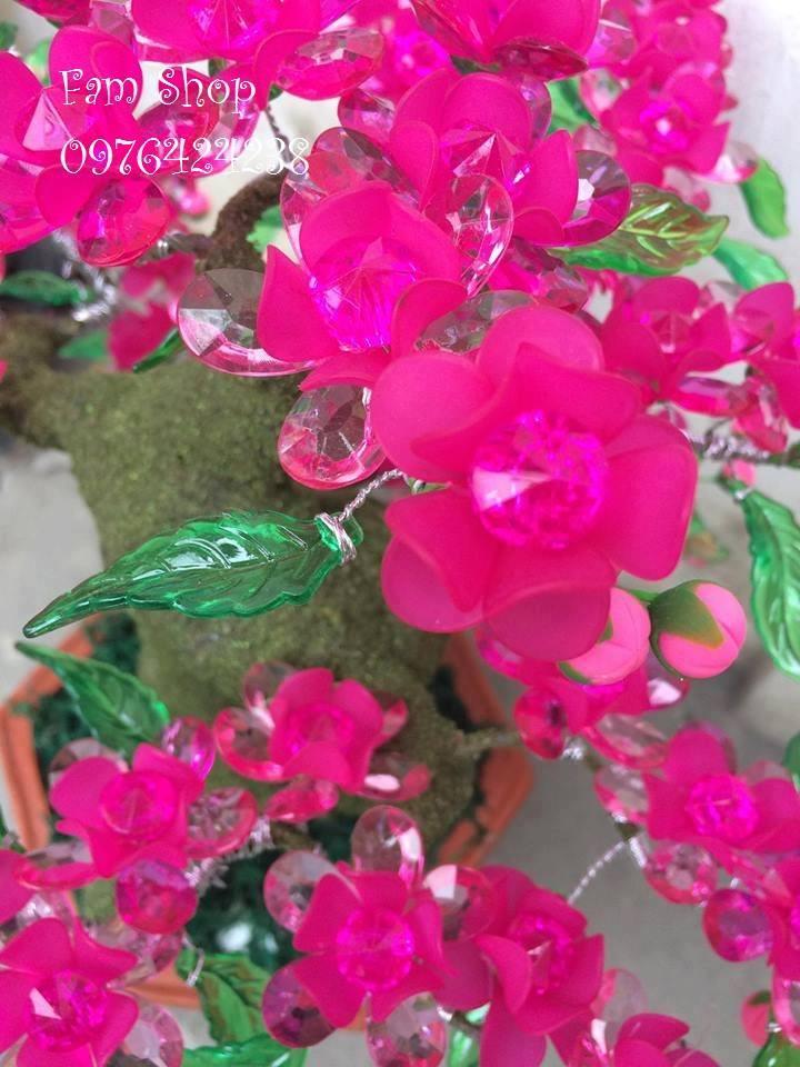 Canh hoa dao lam goc bonsai mai dao o Ba Vi
