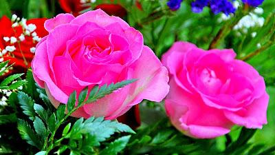 good morning rose flower images