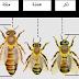 افراد طائفة النحل