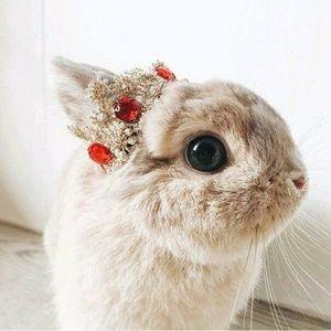 mata kelinci yang menonjol