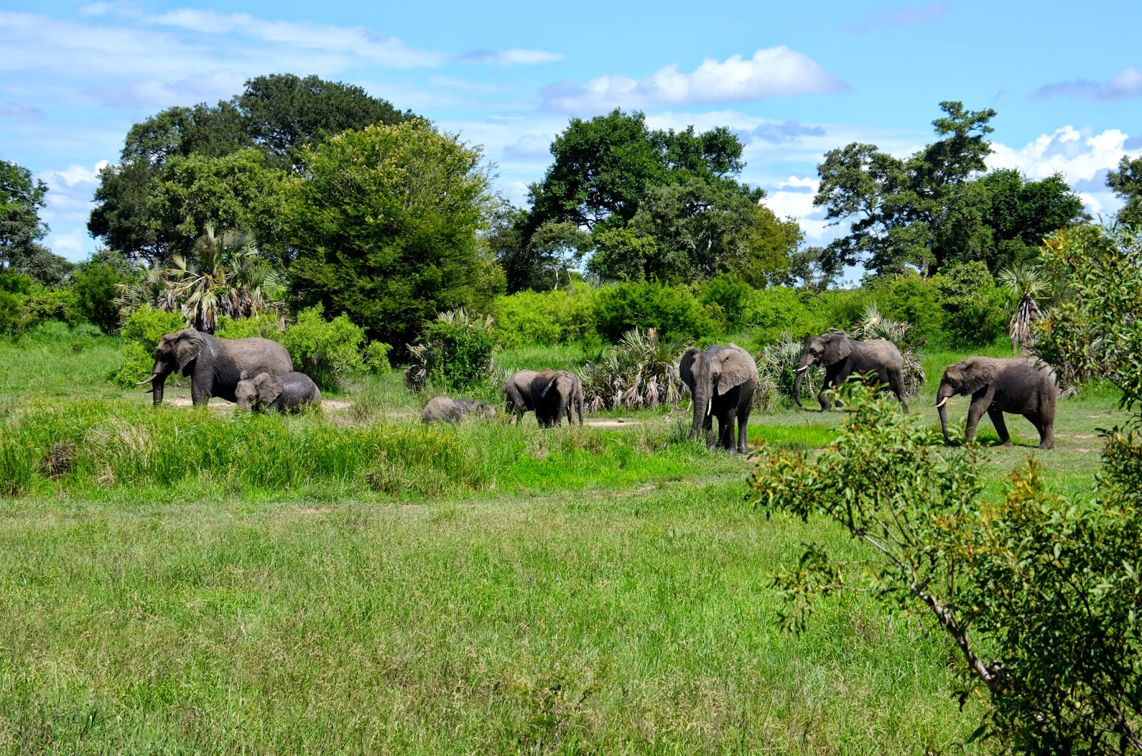 elephant family in kruger national park