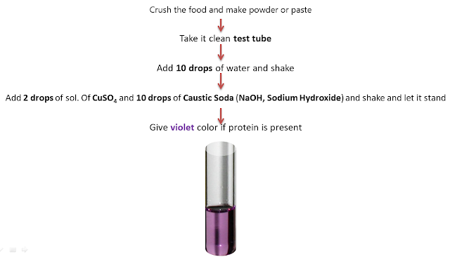 Protein Test, NCERT Class 6 Science Chapter 2 Components of Foods
