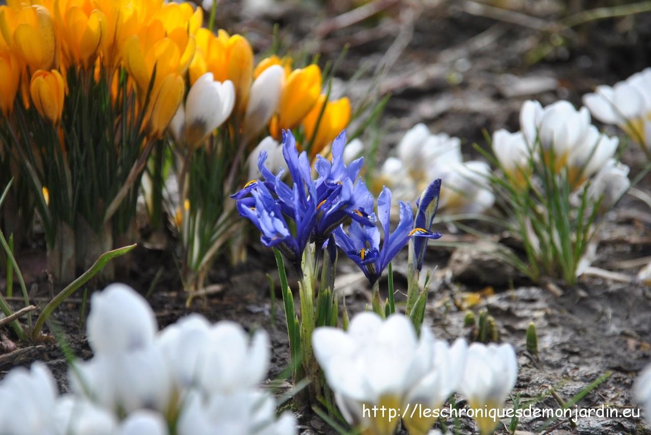 Fond ecran printemps fleurs fonds d 39 cran hd for Site fond ecran